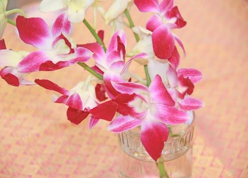 OrchidsSm