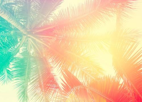 Palm trees sm
