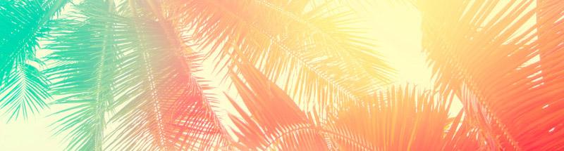 Palm trees strip